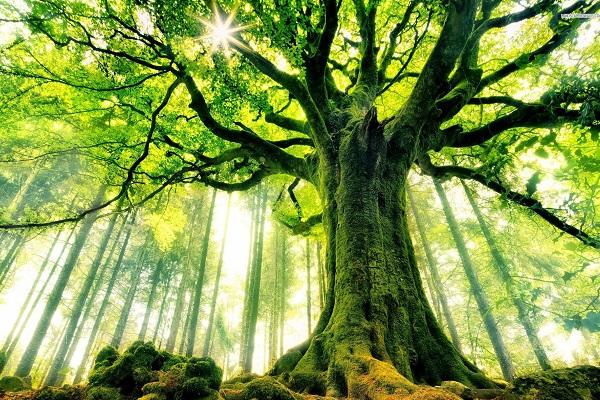 Lastik ve yeşil ilişkisi